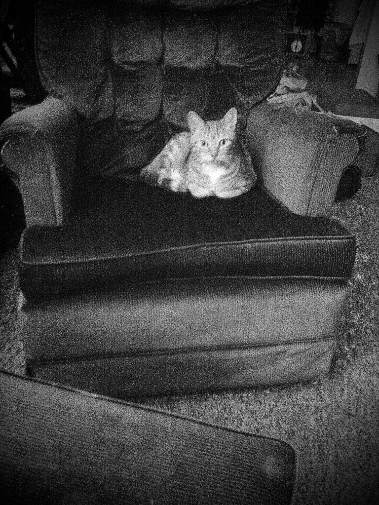 exp film cat on chair cam scan